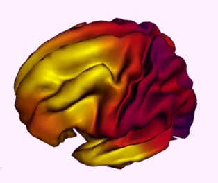 Imagen compuesta que muestra la relación entre la expansión de la superficie del cerebro y la edad en personas de entre 3 y 20 años. Fuente: Hospital Infantil de Los Ángeles.
