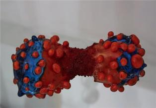 """'Células"""", por Lucy y Jorge Orta. Imagen: EMBL Photolab. Fuente: AlphaGalileo."""