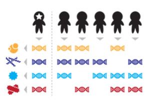 Rasgos del microbioma de cada individuo que, combinados, permiten distinguir unos de otros a nivel individual. Imagen: Eric Franzosa. Fuente: Universidad de Harvard.