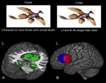 Patrones de actividad cerebral vinculados a dos nuevos conceptos. Fuente: CMU.