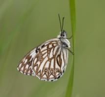 Una mariposa. Fuente: CSIC.