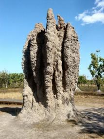 """Imagen de un termitero/ """"Termite Cathedral DSC03570"""". Imagen: Yewenyi. Fuente: Disponible bajo la licencia CC BY-SA 3.0 vía Wikimedia Commons."""