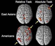Actividad cerebral de asiáticos y americanos mientras hacían juicios perceptivos absolutos y relativos. Fuente: MIT.