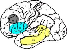 Localización de los componentes de memoria (amarillo), unificación (azul) y control (gris), según el científico Peter Hagoort, del Instituto Max Planck de Psicolingüística. Fuente: PLOS ONE.