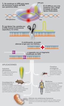 Esquema del funcionamiento de las CRISPR/Cas9. Fuente: Sinc.