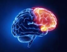 La TDCS fue usada para estimular un área del cerebro conocida por su relación con la creatividad. Fuente: Georgetown University.