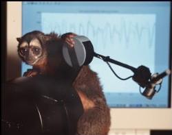 Mono interactuando con un ordenador