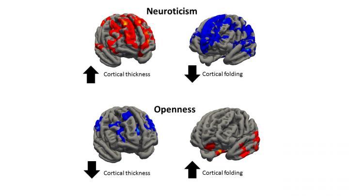 Variaciones cerebrales en casos de nerviosismo y apertura mental.  Luca Passamonti.