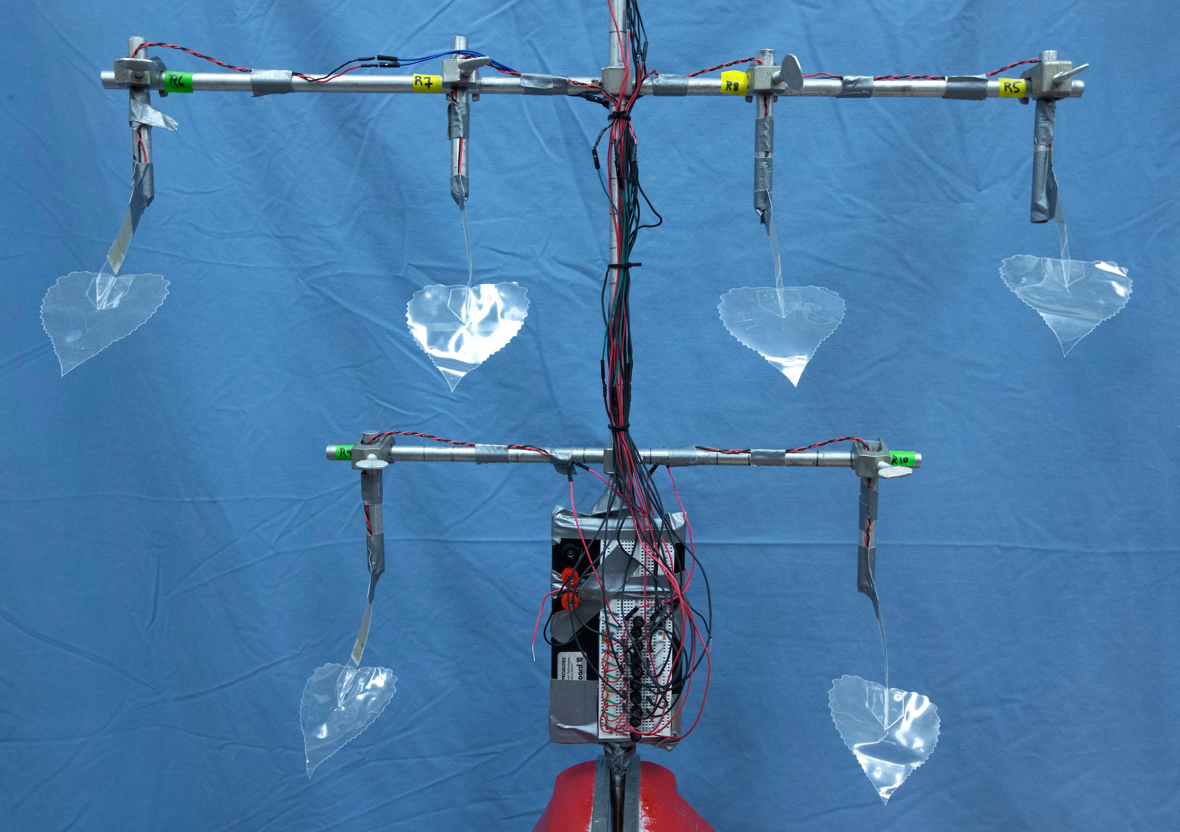Las hojas del árbol biomimético, modeladas como las hojas del álamo, producen electricidad gracias al efecto piezoelétrico. Imagen: Christopher Gannon. Fuente: Universidad Estatal de Iowa (EEUU).