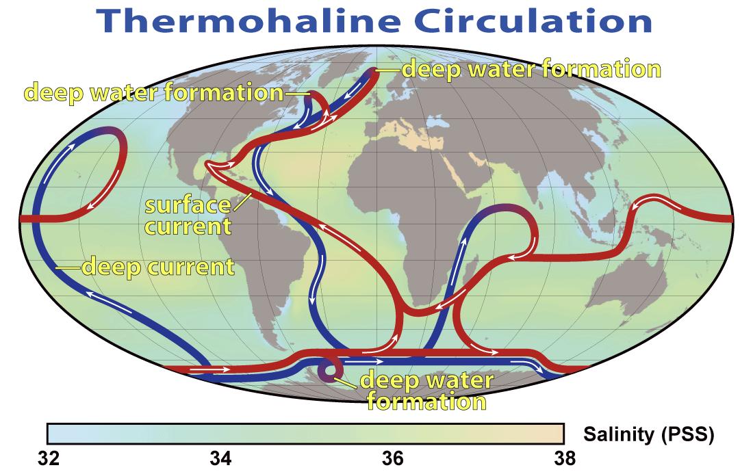 Esquema de las corrientes de circulación termohalina/ Gran transportador Oceánico. Los surcos azules representan corrientes profundas, mientras que los surcos rojos representan corrientes superficiales. NASA.