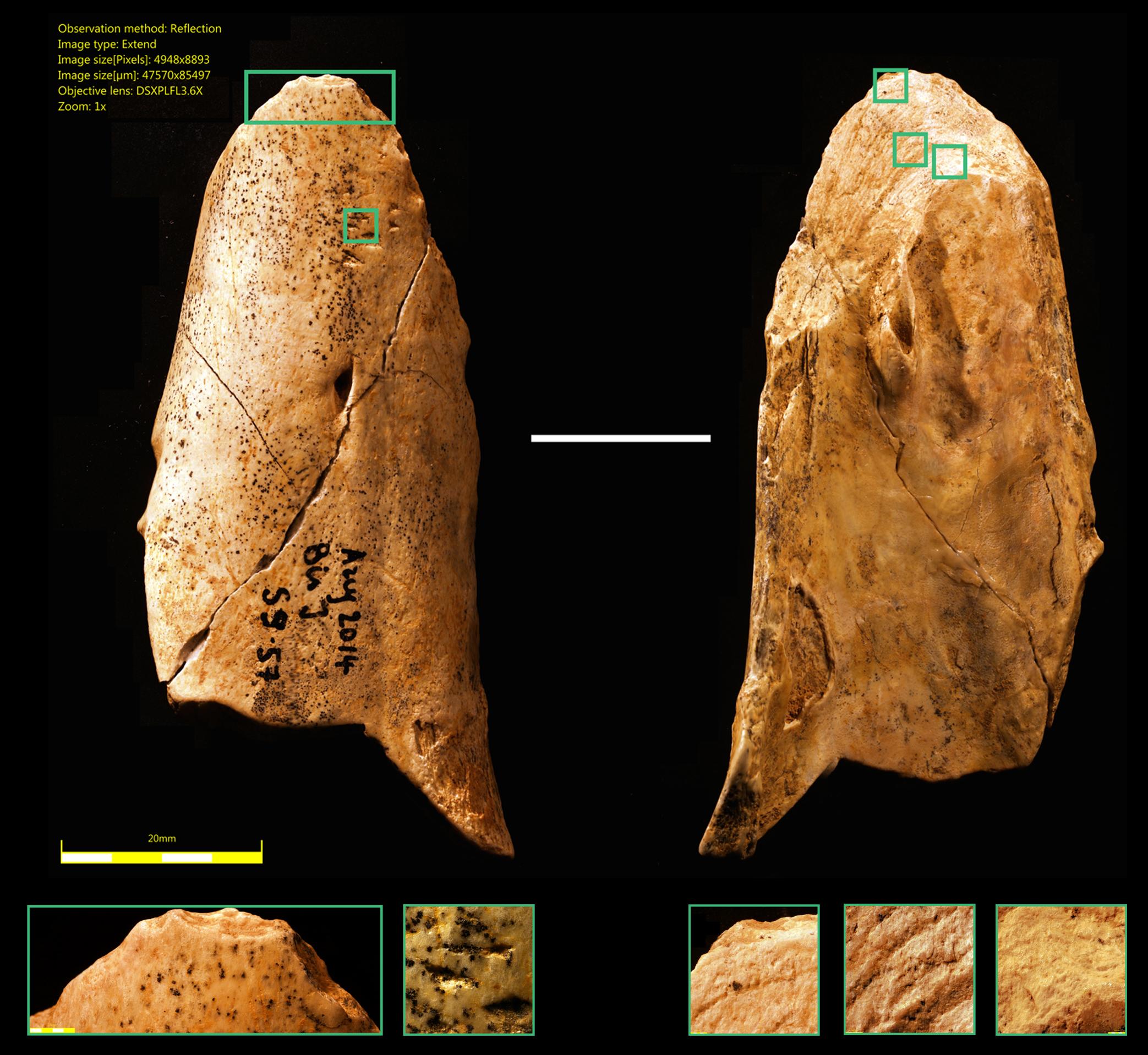 Además de medicinas, los neandertales también usaban herramientas multiusos, como estas de hueso encontrada por investigadores de la Universidad de Montreal en 2015. Fuente: Alphagalileo.