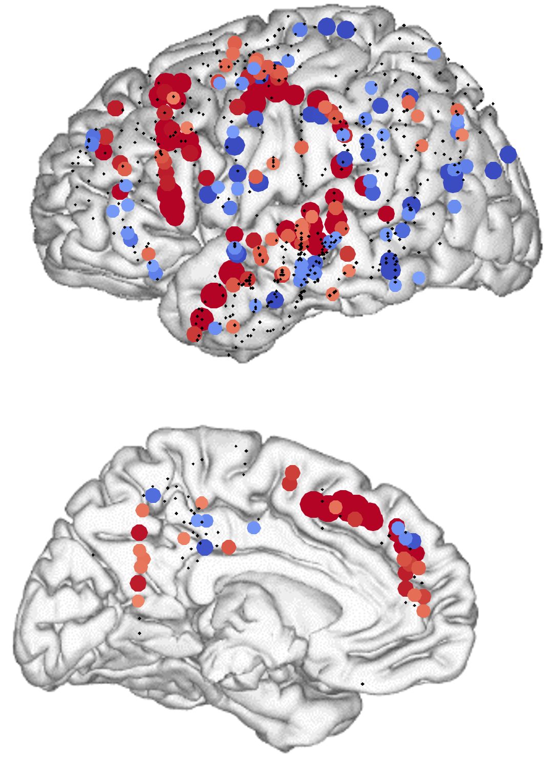 Regiones del hemisferio izquierdo en el que la actividad crece y disminuye según el número de palabras que deben ser integradas en un sintagma. Cada punto rojo representa un electrodo donde el efecto es significativo. © Nelson, et al.