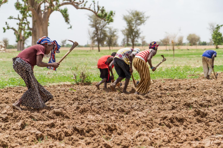 Plantación de maiz en Mali, coincidiendo con la estación de lluvias. Foto: Francesco Fiondella/International Research Institute for Climate and Society, Columbia