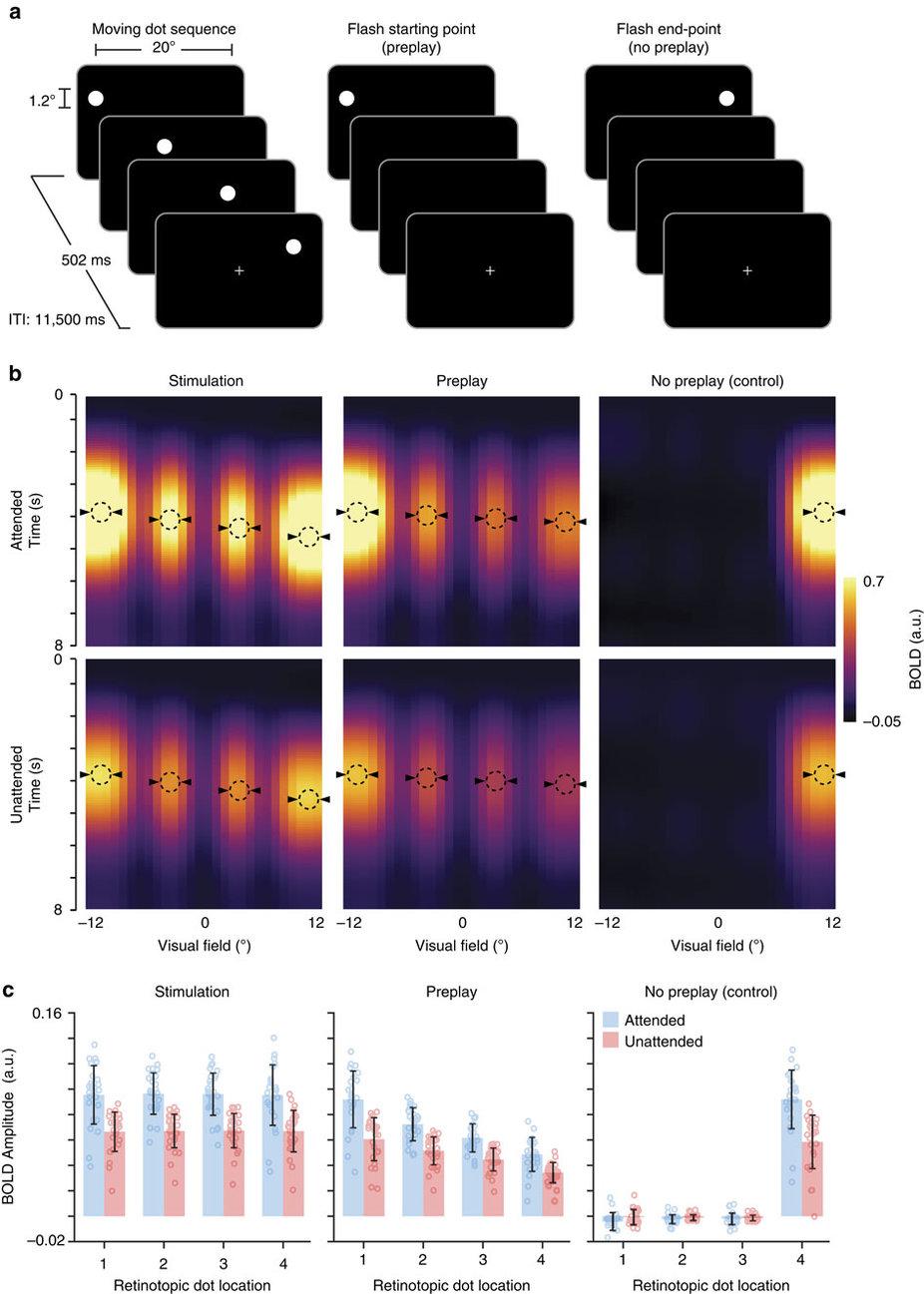 En esta gráfica se muestra a la izquierda, por un lado, el punto blanco en una secuencia y debajo el patrón de actividad cerebral en la corteza visual, que es similar al estímulo del punto visual. En la segunda columna, que recoge otro momento del experimento, sólo el primer momento del punto se mostró a los participantes. Y en la parte inferior se aprecia cómo el patrón de actividad de la corteza visual representa no sólo el punto de partida, sino todos los puntos de la secuencia completa de puntos, que estaban ocultos a los participantes. Imagen: Ekman etal, Nature Communications.
