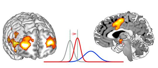 Las dos regiones cerebrales implicadas en una decisión social. Las curvas representan el comportamiento cerebral. La línea gris representa la opinión individual previa. La línea azul, la integración de la opinión individual con la colectiva. Y la línea roja, la decisión colectiva final. © Seongmin Park. Jean-Claude Dreher