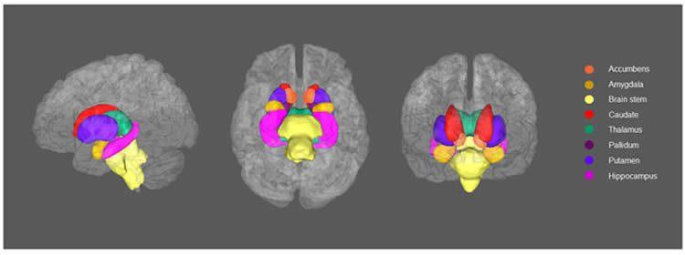Descubren vínculos entre la materia blanca del cerebro y la depresión. Scientific Reports