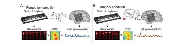 Esquema de la experiencia. (A) El participante toca una pieza en el piano electrónico, con sonido. (B) El participante toca la misma pieza, pero con el sonido desactivado, imaginándose la música que está tocando. En ambos casos, el sonido generado por el piano, con y sin estimulación auditiva, provocó la misma reacción neuronal. Ecole Polytechnique Federale de Lausanne.