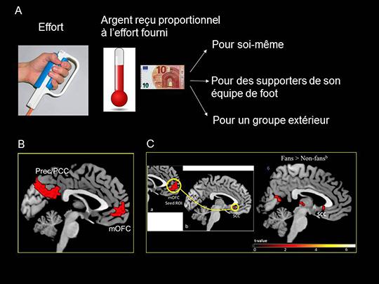 Gráfica del experimento. (A): el esfuerzo físico. (B): Implicación  de la Corteza orbitofrontal (mOFC) y de la precuña del lóbulo parietal inferior en la motivación para ganar dinero para uno mismo u otro (ya sea del mismo grupo o no). (C): A la izquierda, conexión del córtex subgenual (SCC) con la corteza media orbitofrontal. Derecha: implicación del SCC en el apoyo al propio grupo. Fuente: INSB