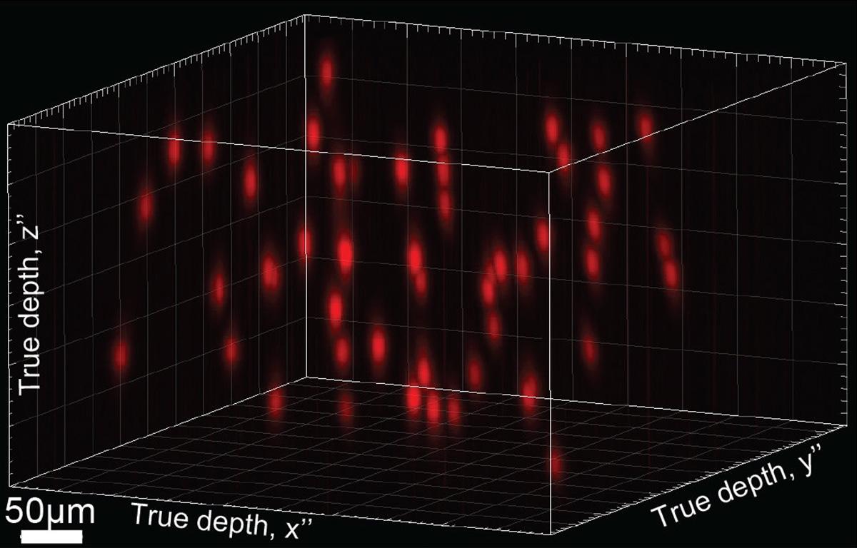 Holograma con 50 neuronas seleccionadas distribuidas al azar, que abarcan una región cerebral de 500 micras cuadrados y 250 micras de profundidad. Universidad de Berkeley.