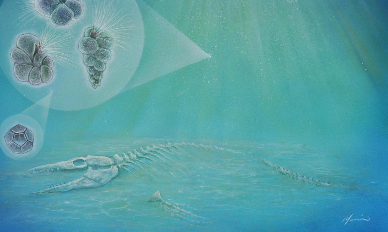 Las tres formas cubiertas de pelo (izquierda) representan especies de plancton que se encontraron dentro del cráter. La forma geométrica (abajo a la izquierda) es una especie de alga. Pequeños organismos como estos se desplazaron hacia cráter tan rápidamente que los huesos de los animales que murieron por el impacto, como el mosasaurio que se muestra en la imagen, pudieron haber sido aún visibles.  Arte original de John Maisano, Universidad de Texas Jackson School of Geosciences.