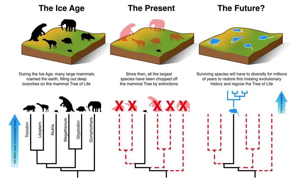 Ilustración sobre la forma en la que los pequeños mamíferos (aquí ejemplificados con una nutria) deberían evolucionar y diversificarse a lo largo de 3 a 5 millones de años para compensar la pérdida de grandes mamíferos. Universidad de Aarhus. Matt Davis. Click sobre la imagen para ampliar.