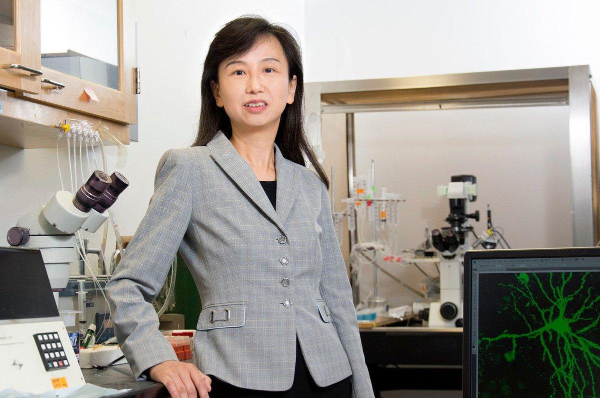 Zhen Yan, profesora del Departamento de Fisiología y Biofísica Escuela Jacobs de Medicina y Ciencias Biomédicas. Imagen: University at Buffalo.