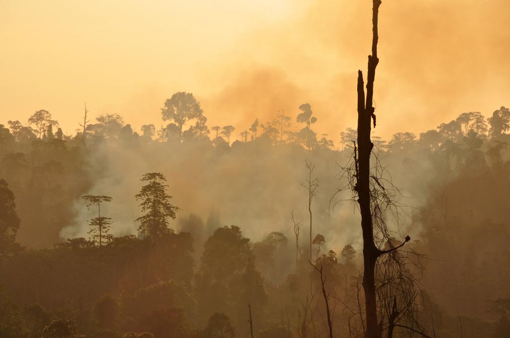 Incendio forestal en Indonesia. Foto: Donal Bason / USAID Biodiversity & Forestry.