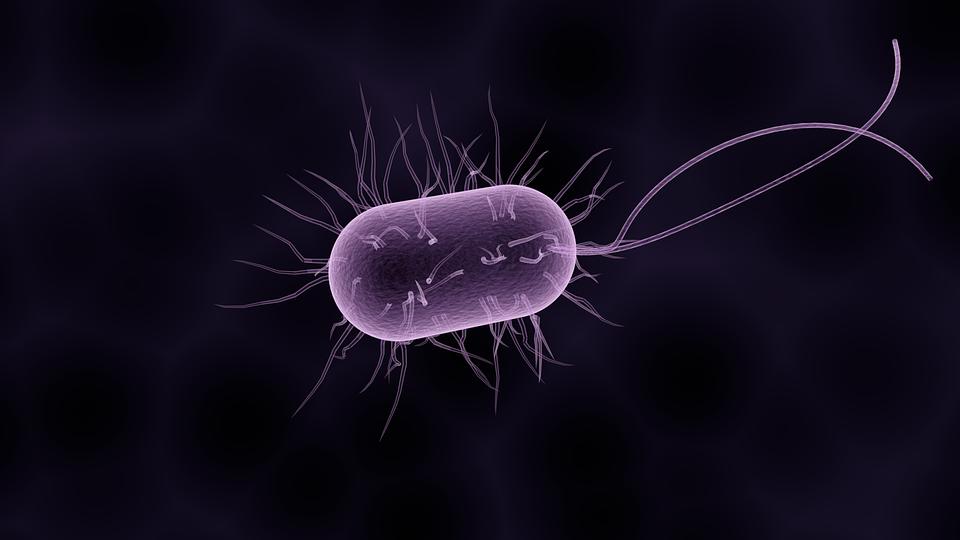 Científicos de la Universidad de Rice han construido un modelo para predecir cuánto tiempo se tarda de media en erradicar infecciones bacterianas con antibióticos. Imagen: Raman Oza.