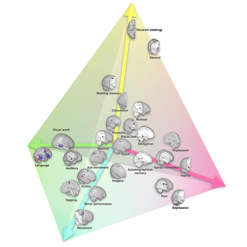 """La lateralización de las funciones cerebrales aparecen representadas en un espacio de 4 dimensiones a lo largo del eje de comunicación simbólica (verde), el eje de """"percepción / acción"""" (azul), el eje de emociones (rosa) y la eje de decisión (amarillo).  (cc) Karoliset al./ Nature Communications."""