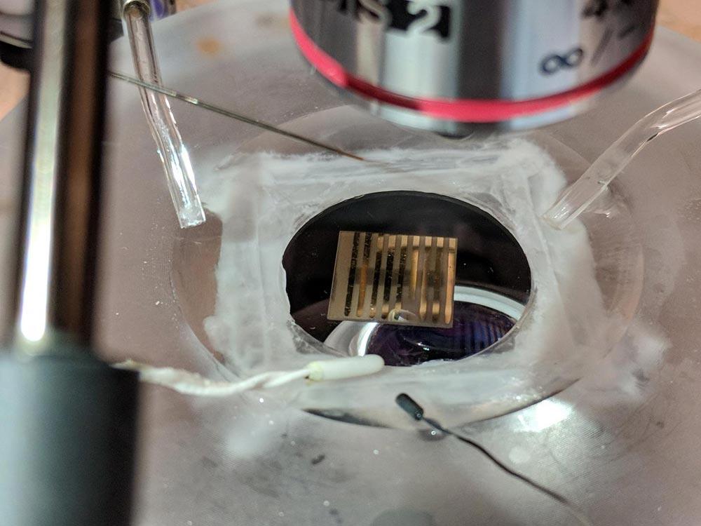 """Imagen del nuevo material cuántico capaz de """"escuchar"""" al cerebro mediante la captura de los átomos que el cerebro utiliza naturalmente para comunicarse. Foto: Universidad de Purdue / Hai-Tian Zhang."""