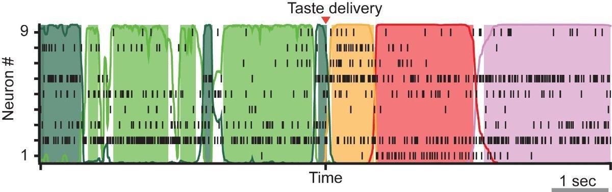 Esta imagen codificada por colores revela la actividad de nueve neuronas de la corteza gustativa. Cada vez que un color cambia, las neuronas se vuelven más o menos activas, lo que indica un cambio en los estados neuronales. Según los autores, estos estados pueden ser alterados por la expectativa. Imagen: Fontanini et al.