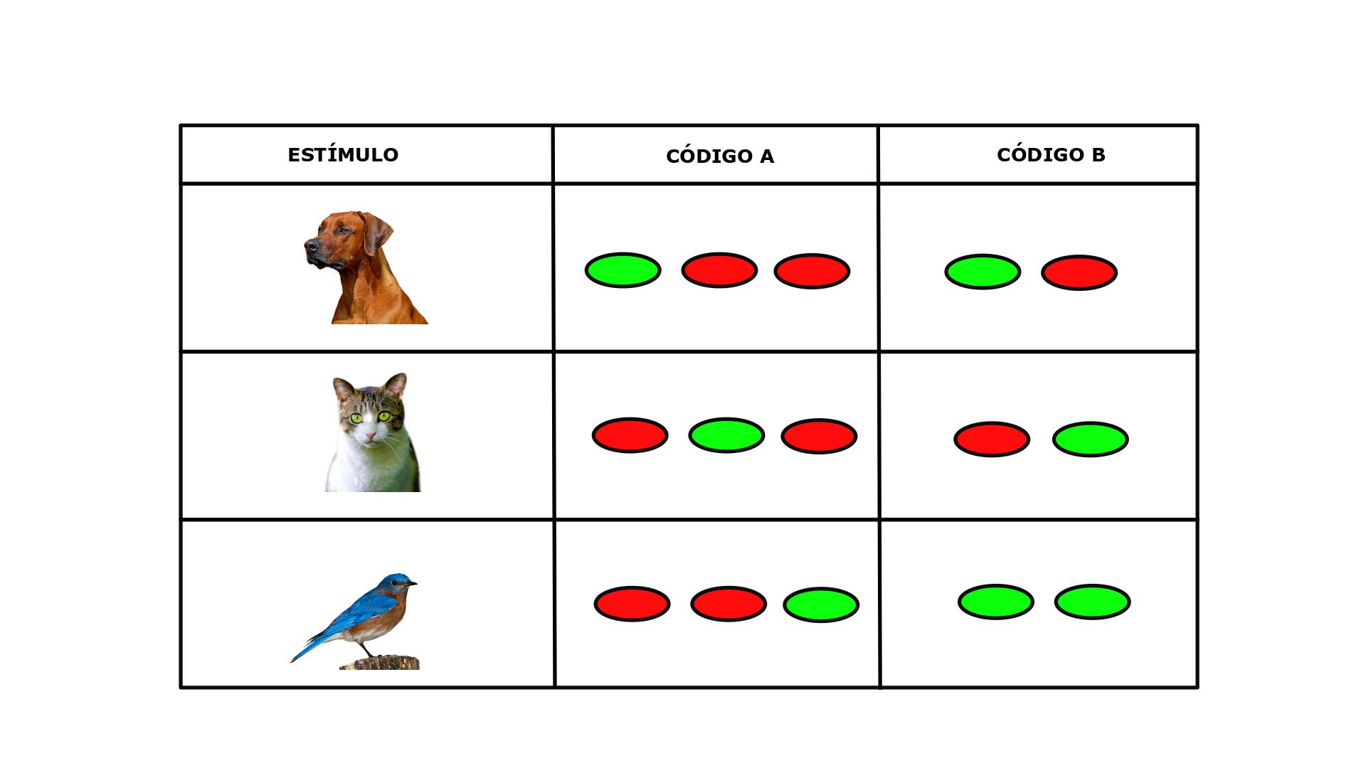 Ilustración de dos códigos neuronales distintos para representar distintos estímulos. Fuente: Universidad Isabel I.