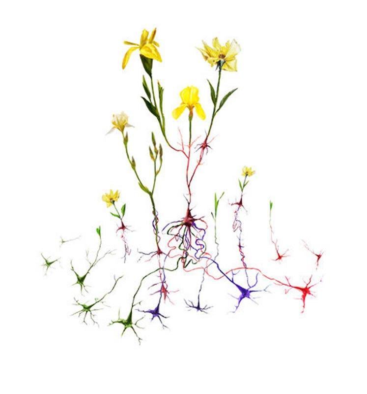 Esta ilustración muestra nuevas raíces, representadas como neuronas, que florecen en una flor significando un nuevo comportamiento o habilidad. Crédito: Frank Harris para la Universidad de Pittsburgh.