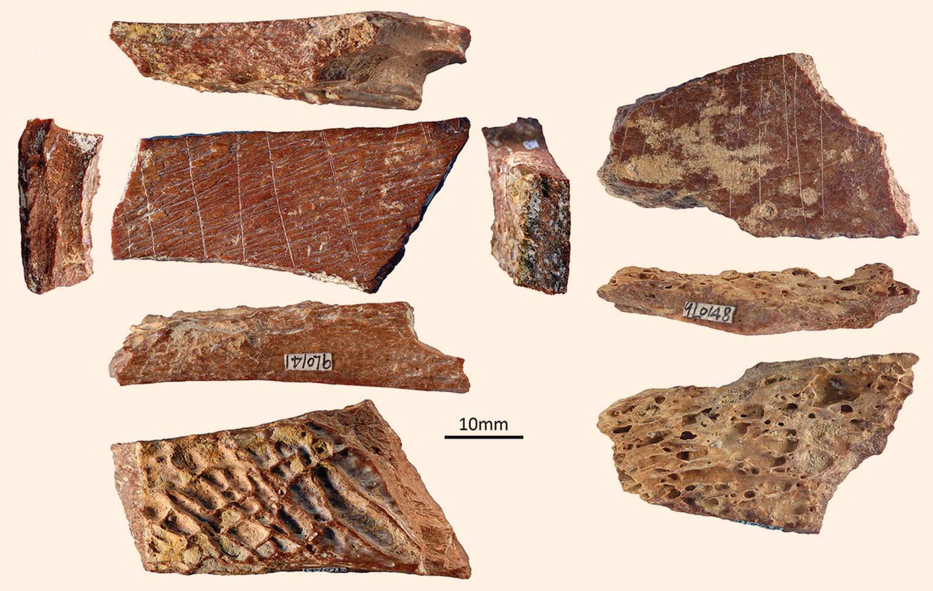 Fotografías de los dos fragmentos de hueso grabados de Lingjing, China. Crédito de la imagen: F. d'Errico & L. Doyon.