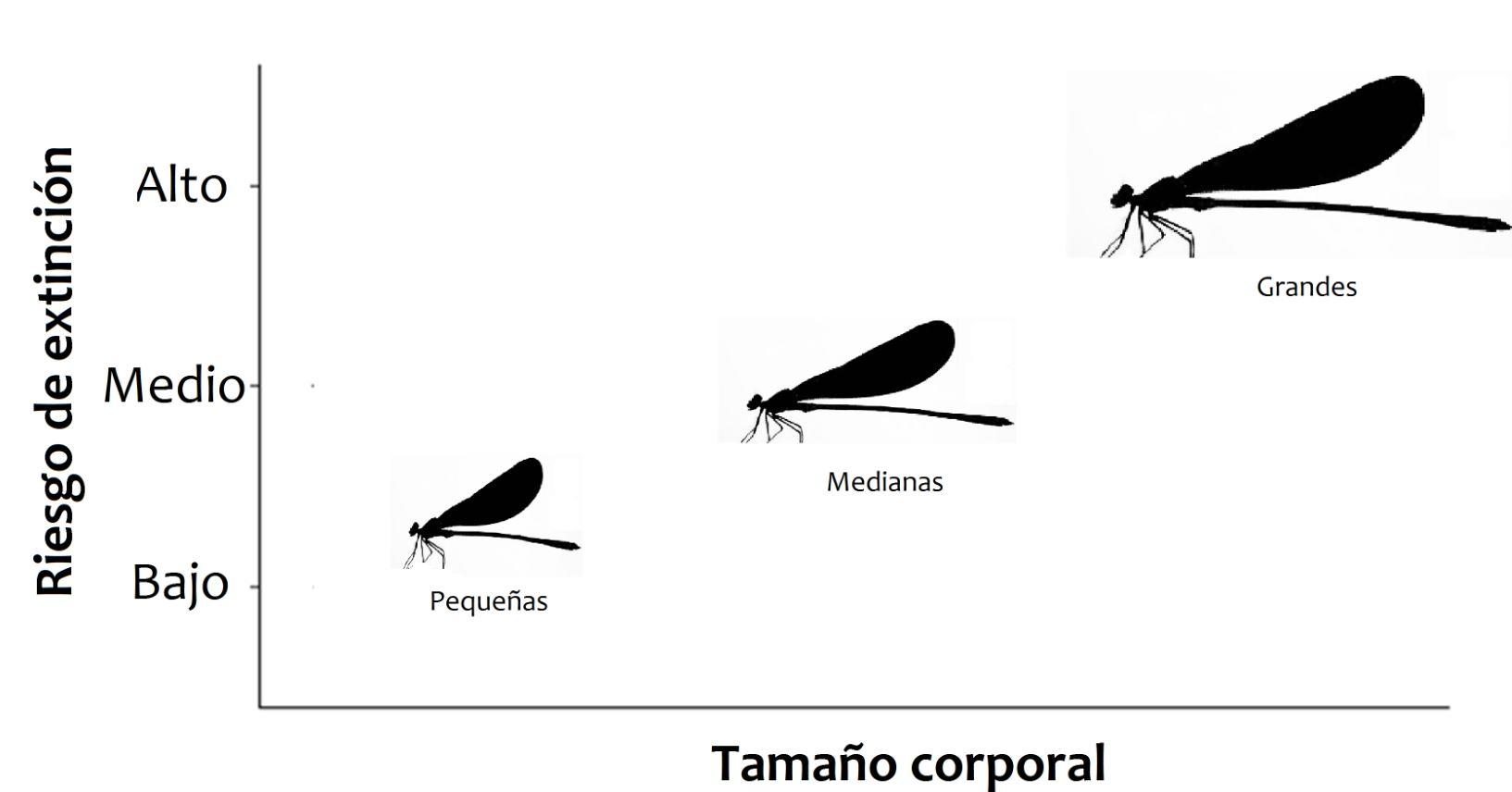 Figura 2. Relación entre riesgo de extinción y tamaño corporal encontrada en especies de caballitos del diablo.