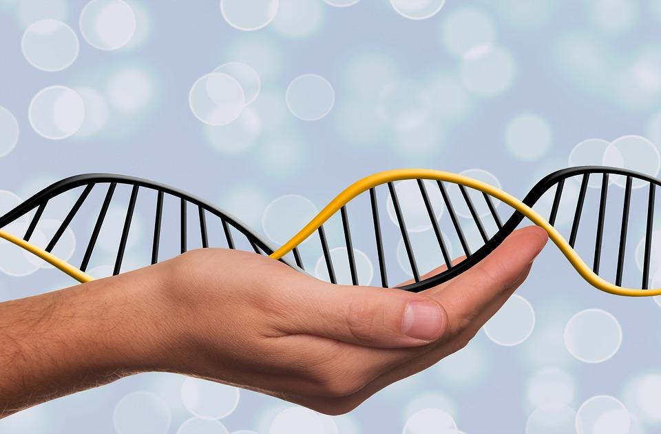 Una proteína que solo está presente en los telómeros muestra una acción global sobre todo el genoma. / Pixabay