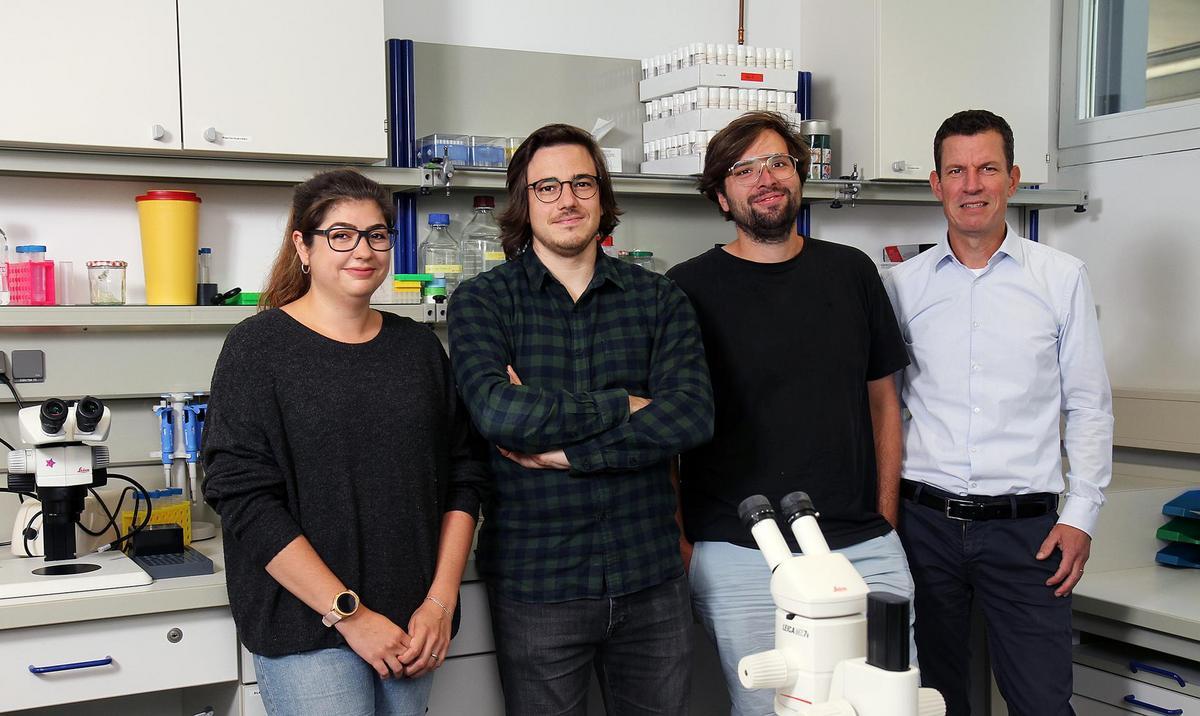 Los autores de esta investigación (de izquierda a derecha): Vanessa Bräuler, Benjamin Escribano, Dominique Siegenthaler y el Prof. Dr. Jan Pielage. Crédito: Koziel / TUK