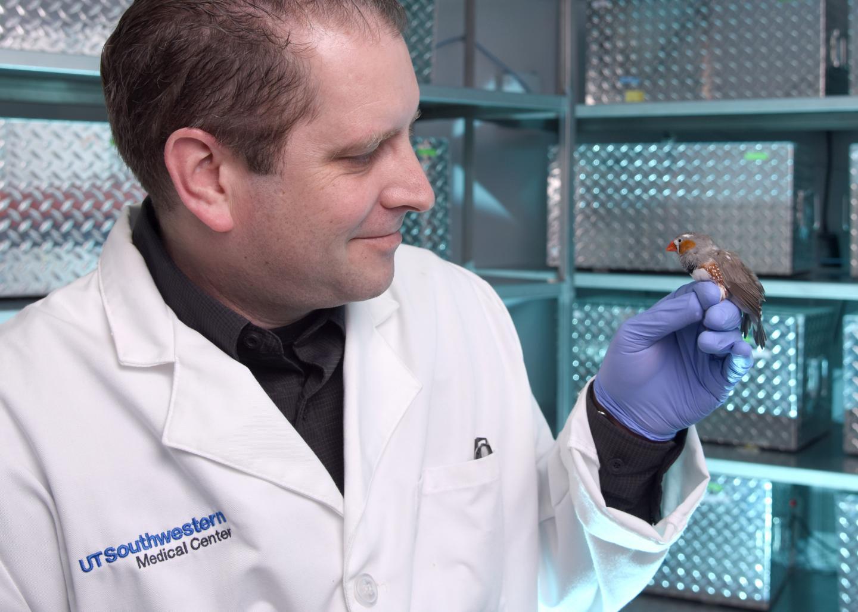 El laboratorio del Dr. Todd Roberts se especializa en documentar cómo funciona el cerebro durante el aprendizaje vocal. Foto: UTSW
