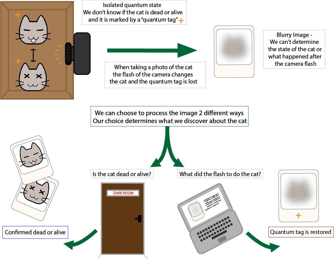 Dado que el gato en la caja (arriba a la izquierda) está en una superposición, eso significa que puede estar muerto y vivo y está marcado con una etiqueta cuántica que comprende ambos estados. La foto del gato está vinculada a la situación dentro de la caja. Podemos decidir el destino del gato procesando la foto de cierta manera (abajo a la izquierda), o podemos mantenerlo en superposición (vivo y muerto) restaurando la etiqueta cuántica mediante un proceso diferente (abajo a la derecha). Crédito: Holger F. Hofmann y Emma Buchet. Universidad de Hiroshima.