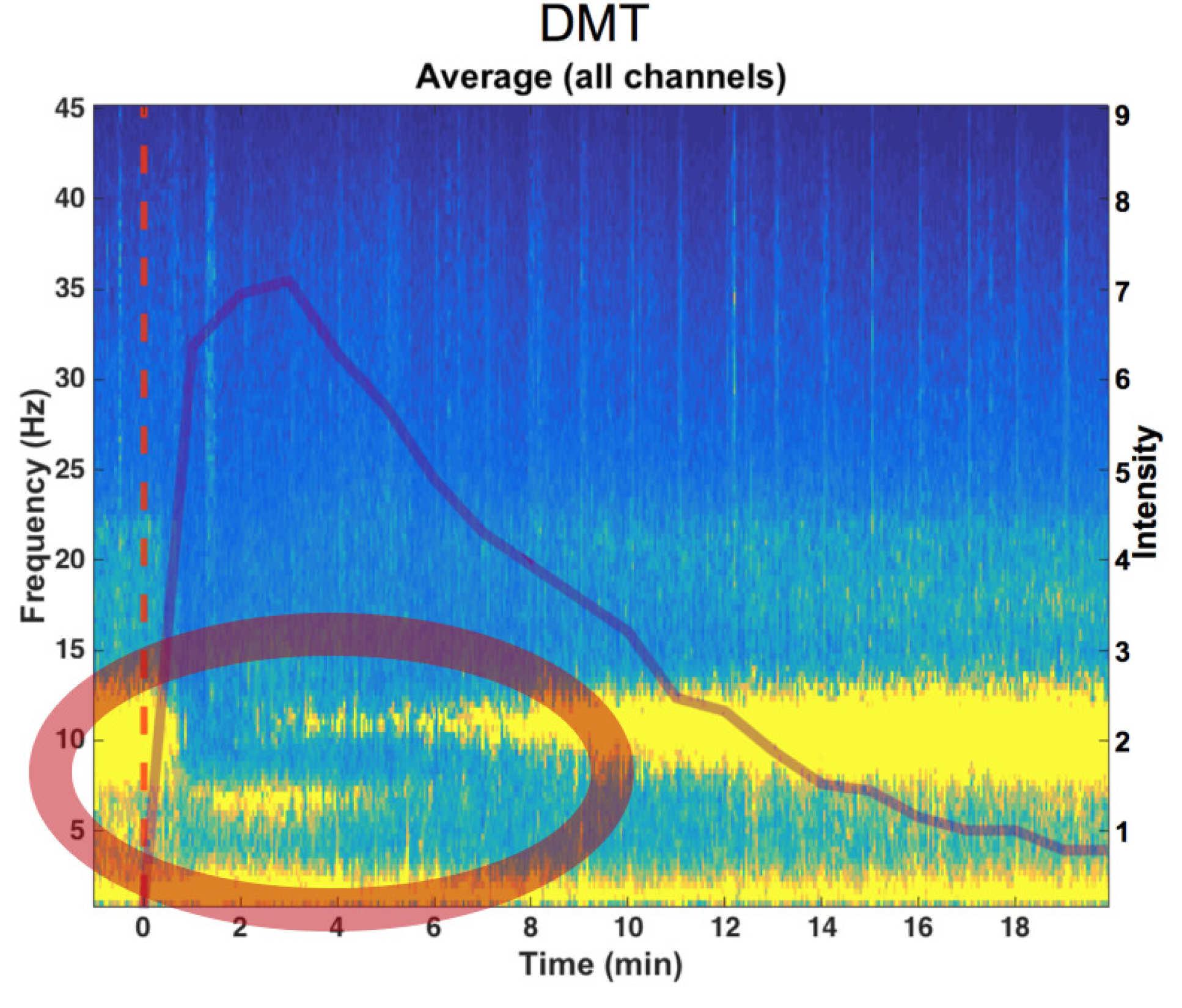 DMT altera significativamente la actividad eléctrica en el cerebro, caracterizada por un marcado descenso en las ondas alfa y un aumento en las ondas delta y theta. El círculo rojo muestra un aumento en las ondas delta y theta de baja frecuencia (Crédito: Chris Timmermann)