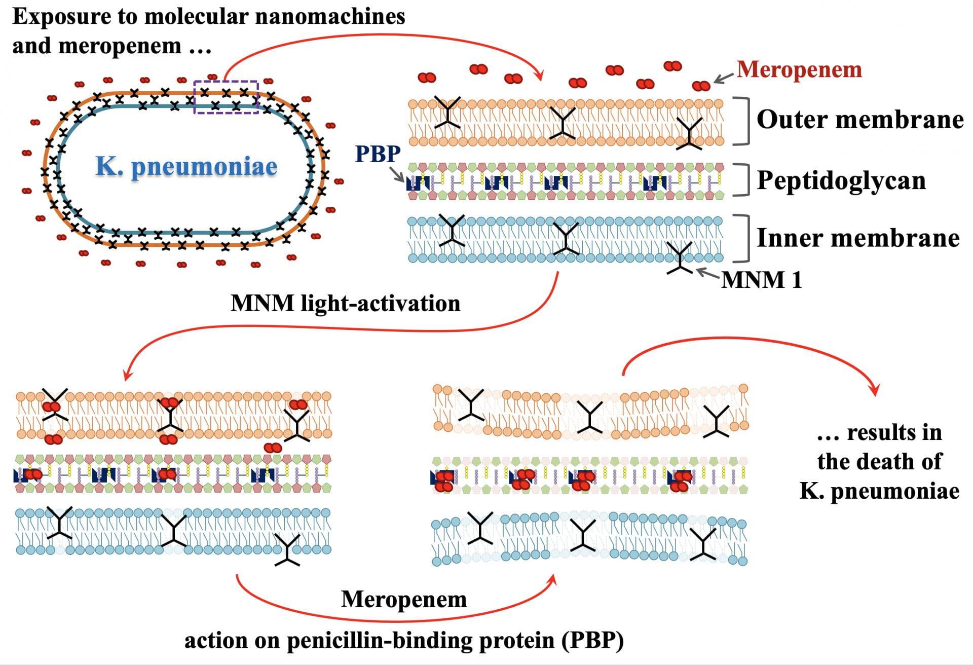 Ilustración de cómo las máquinas moleculares activadas por la luz perforan las bacterias, creando un camino para los antibióticos.Ilustración de Don Thushara Galbadage.