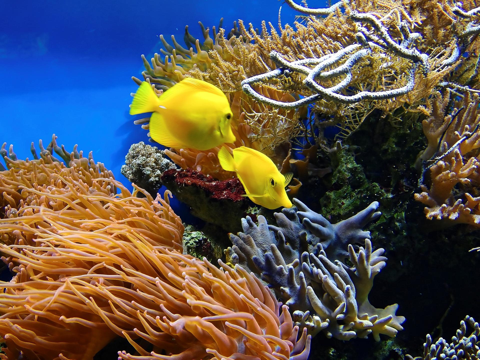 Los corales son parte de las comunidades estudiadas que se organizan en guetos. © Bruno Glätsch