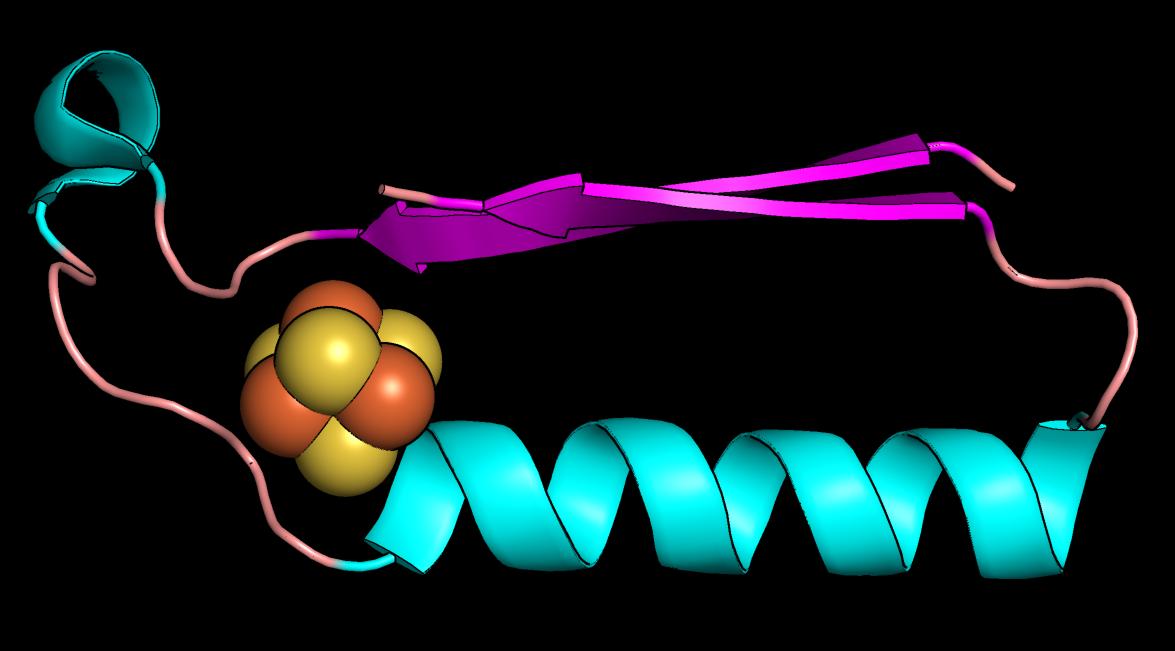 Esta imagen muestra un pliegue (forma) que pudo haber sido una de las primeras proteínas en la evolución del metabolismo. Imagen: Vikas Nanda / Universidad Rutgers