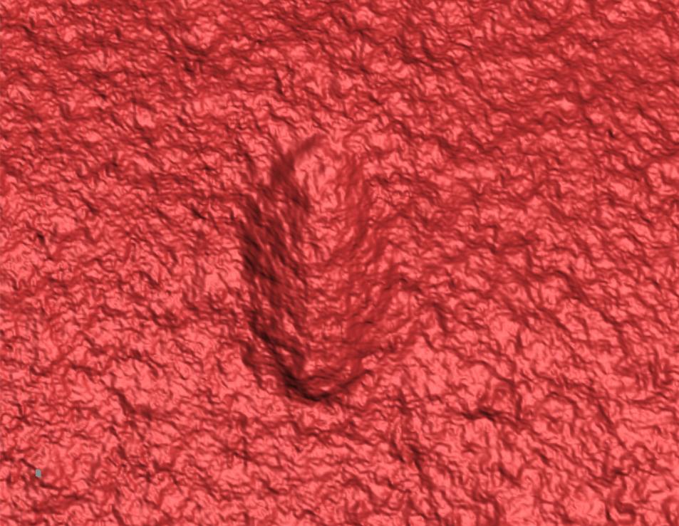 Escaneo láser 3D de una wariootia Ikaria en piedra. Foto: Droser Lab / UCR