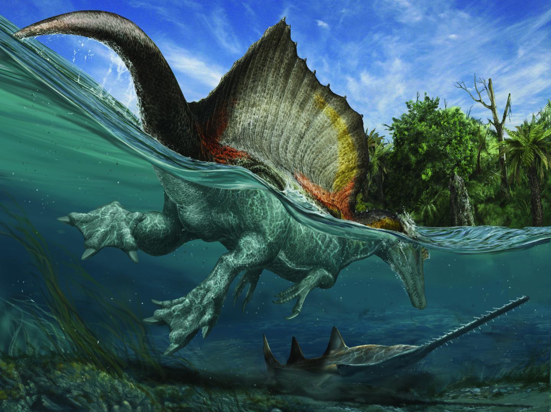 El más famoso de los dinosaurios Kem Kem, el Spinosaurus gigante semiacuático, y el más común de los fósiles de Kem Kem, el pez sierra gigante Onchopristis, se enredan en las aguas costeras poco profundas en un cálido día del Cretácico tardío. Ilustración de Davide Bonadonna.