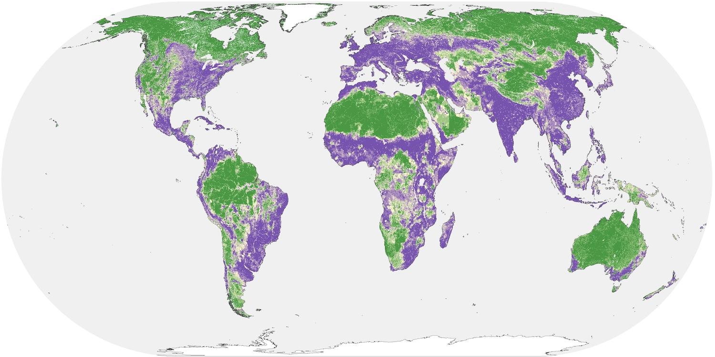 Mapa de impacto humano en tierras naturales, con áreas verdes que representan áreas de bajo impacto humano y áreas moradas con mayor impacto. (Riggio y col. / UC Davis)