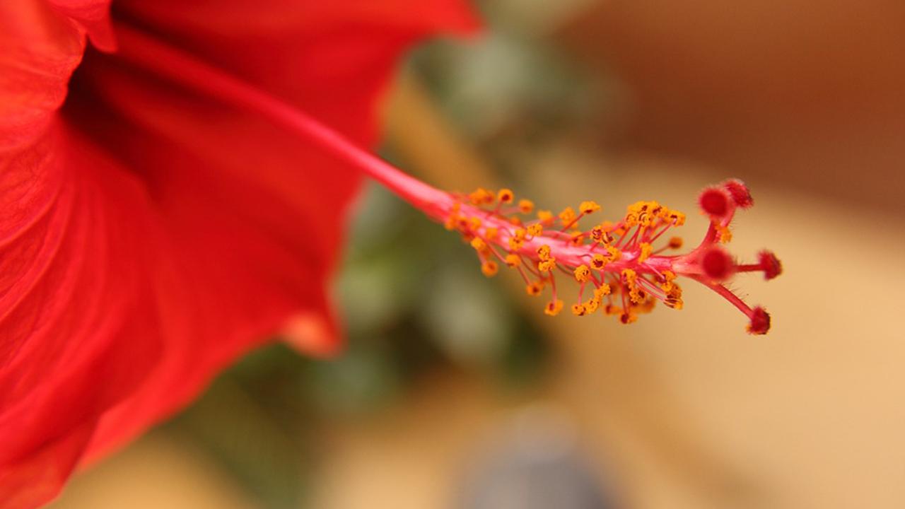 No hay necesidad de Viagra entre los 'machos' en el reino vegetal. Foto: Pixabay.