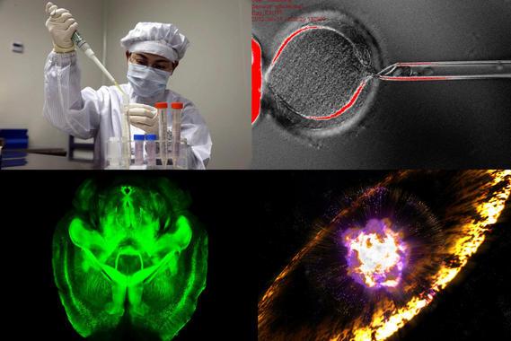 De arriba a abajo y de izquierda a derecha: un científico investiga el virus H7N9, una célula madre embrionaria, el cerebro transparente de un ratón y la representación de la explosión de una supernova. Fuente: SINC/Varios.