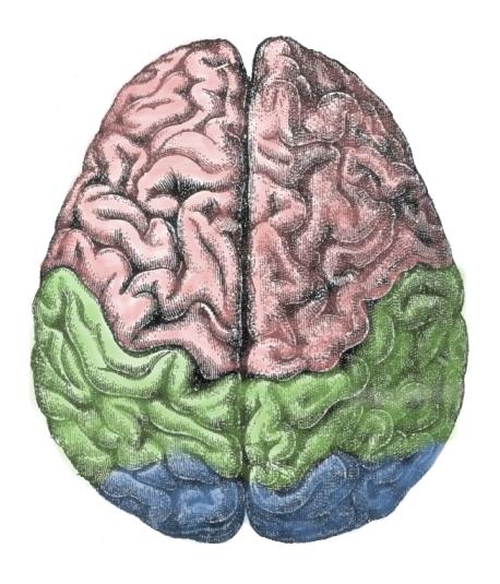 Estimular el cerebro es la última tendencia del dopaje en el deporte. Fuente: Wikipedia.