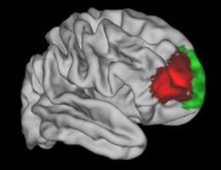 La zona roja parece exclusiva de los humanos. Fuente: Universidad de Oxford.